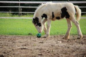 Rosalie mit Ball