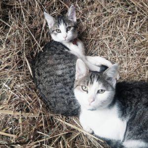 Kater Ama und Atsila