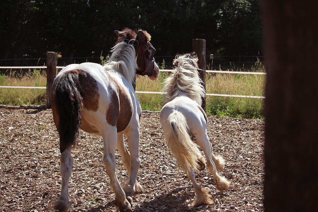 Enna und Rosalie beim Jährlingstraining