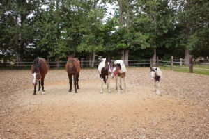 Gruppenfoto der Pferde von Grundstein 8