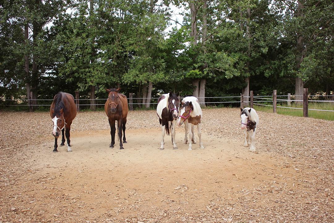 Gruppenfoto aller Pferde von Grundstein 8