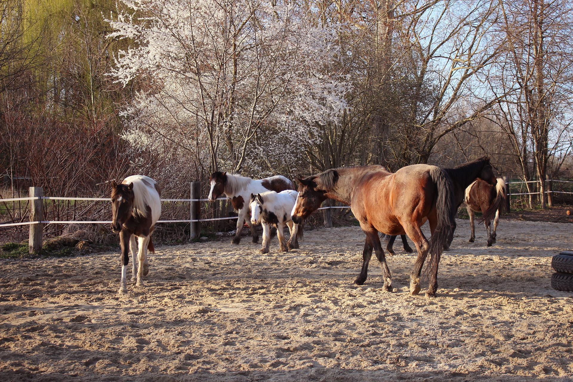 Die Herde und Dakota Integration Tag 1